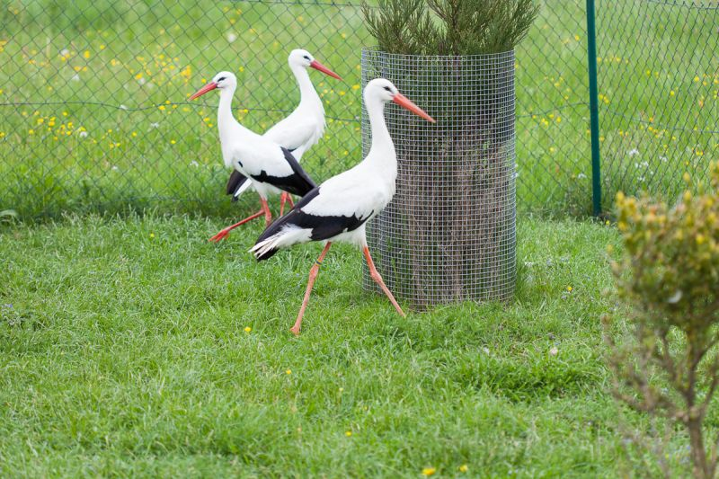Storch_05